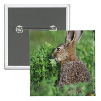 Brown Hare, Lepus europaeus, young eating, Pinback Button