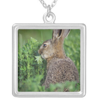 Brown Hare, Lepus europaeus, young eating, Silver Plated Necklace