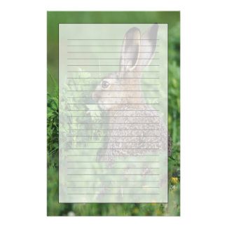 Brown Hare, Lepus europaeus, young eating, Stationery