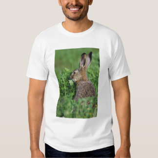 Brown Hare, Lepus europaeus, young eating, T-shirt