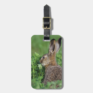 Brown Hare, Lepus europaeus, young eating, Tags For Luggage