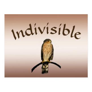 Brown Hawk Indivisible Postcard