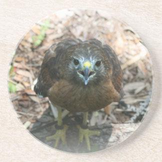 Brown Hawk mouth open glaring at camera Beverage Coaster