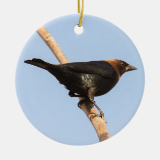 Brown-headed Cowbird Ceramic Ornament