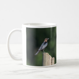 Brown-headed Cowbird Coffee Mug