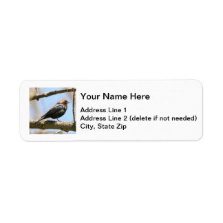 Brown-headed Cowbird Label