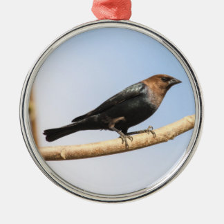 Brown-headed Cowbird Metal Ornament