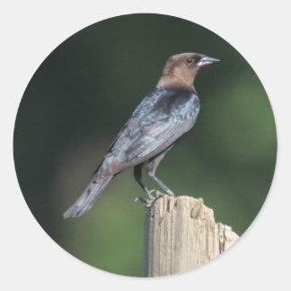 Brown-headed Cowbird Stickers