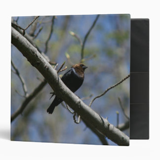 Brown-headed Cowbird, Three Ring Binder. 3 Ring Binder