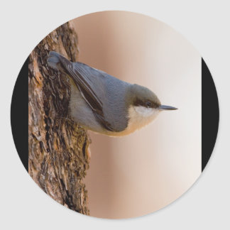 Brown-headed Nuthatch Classic Round Sticker