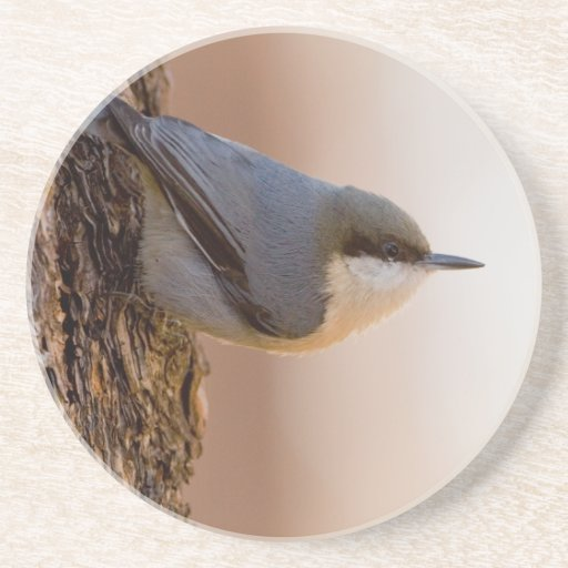 Brown-headed Nuthatch Drink Coaster