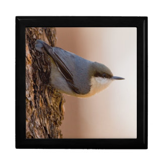 Brown-headed Nuthatch Trinket Boxes