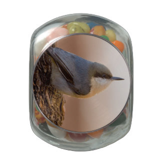 Brown-headed Nuthatch Jelly Belly Candy Jars