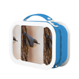 Brown-headed Nuthatch Lunch Box
