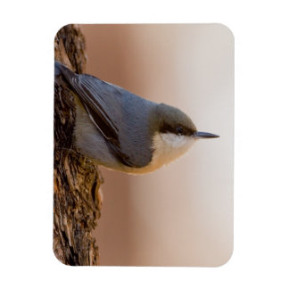 Brown-headed Nuthatch Magnet