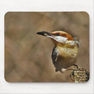 Brown-headed Nuthatch Mouse Pad