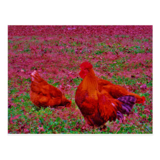 Brown  Hens in the Purple Grass Postcard