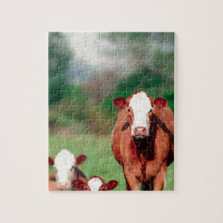 Brown hereford cattle jigsaw puzzle