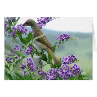 Brown Honeyeater #1 Stationery Note Card
