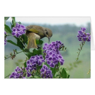 Brown Honeyeater looking back Stationery Note Card