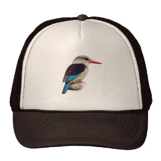 Brown-Hooded Kingfisher Hat