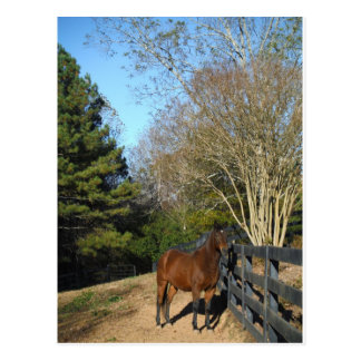 Brown Horse against a Fence Postcards