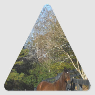 Brown Horse against a Fence Triangle Sticker