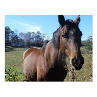 Brown Horse against blue sky Postcard