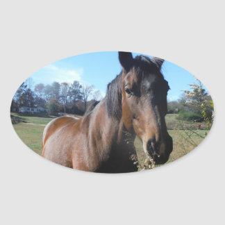 Brown Horse against blue sky Oval Sticker
