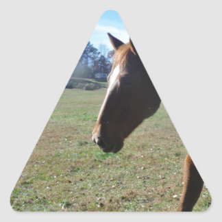 Brown Horse against blue sky Triangle Sticker