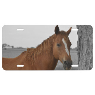 Brown Horse, B&W Background License Plate License Plate