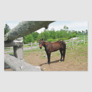 Brown horse behind fence rectangular stickers