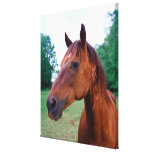 Brown horse, close-up canvas prints