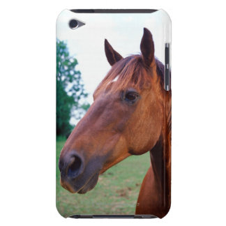 Brown horse, close-up iPod touch Case-Mate case