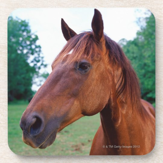 Brown horse, close-up drink coaster