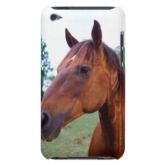 Brown horse, close-up iPod touch case