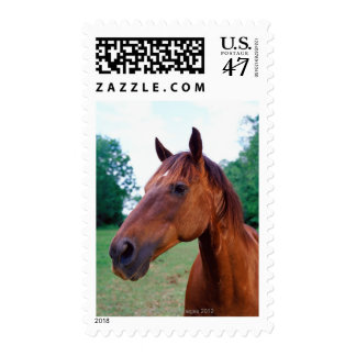 Brown horse, close-up postage stamp