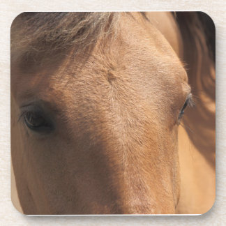 Brown Horse Drink Coaster