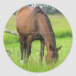 Brown Horse Eatting Grass in a Bright Green Field Classic Round Sticker