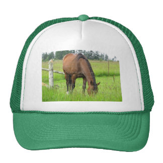 Brown Horse Eatting Grass in a Bright Green Field Mesh Hats