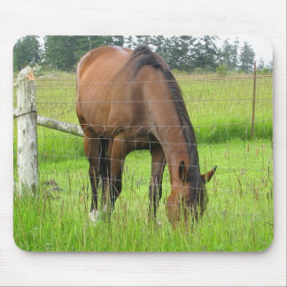 Brown Horse Eatting Grass in a Bright Green Field Mouse Pad