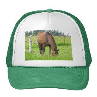 Brown Horse Eatting Grass in a Bright Green Field Trucker Hat