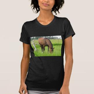 Brown Horse Eatting Grass in a Bright Green Field T-shirt