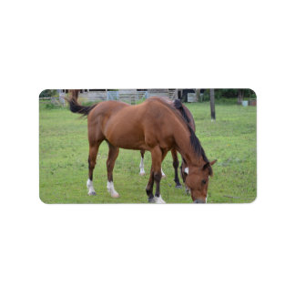 brown horse facing right grazing equine image.JPG Address Label