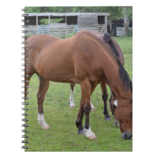 brown horse facing right grazing equine image.JPG Spiral Notebook