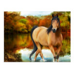 brown horse, flowers,tree postcards