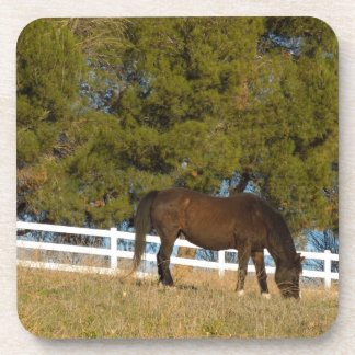 Brown Horse Grazing Coaster