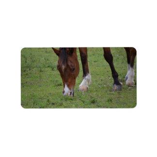 brown horse grazing land equine.JPG Address Label