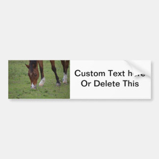 brown horse grazing land equine.JPG Car Bumper Sticker