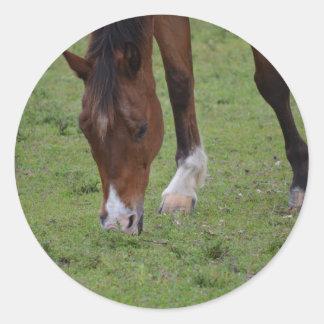 brown horse grazing land equine.JPG Classic Round Sticker